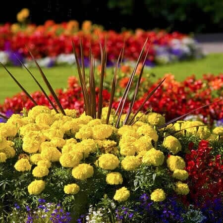 Beautiful and colorful flowers in planting beds